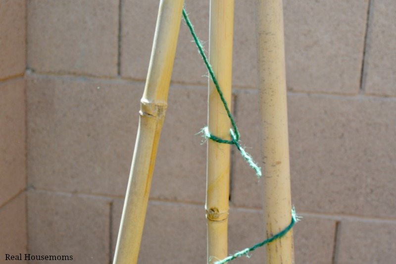 DIY Natural Bamboo Tomato Cage: Don't Slip