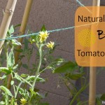 DIY Natural Bamboo Tomato Cage