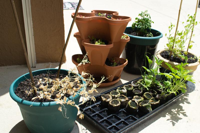 garden20130427 crop 800x533
