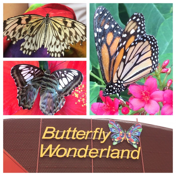 Butterfly Wonderland | Family Fun in Scottsdale, AZ. #ScottsdaleAZ