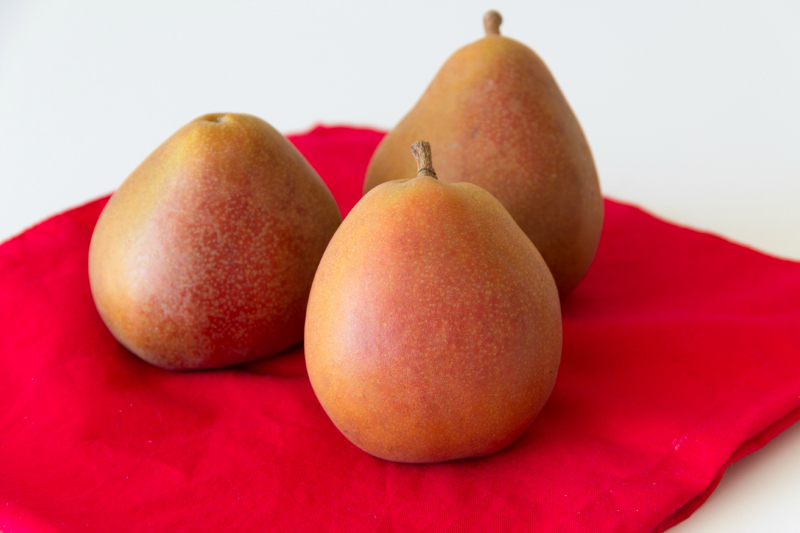 New Zealand Taylor Gold Pears & a recipe for Chocolate Dipped Pear Popsicles