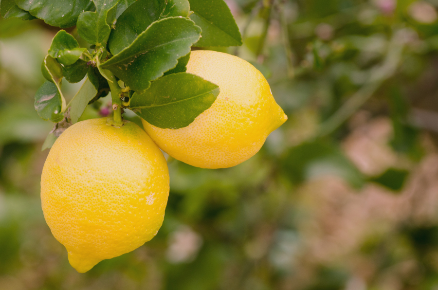 Take full advantage of lemon season, by processing and freezing them when they are at their peak. These Tips for Freezing Lemons will ensure you'll have delicious lemons all year long.