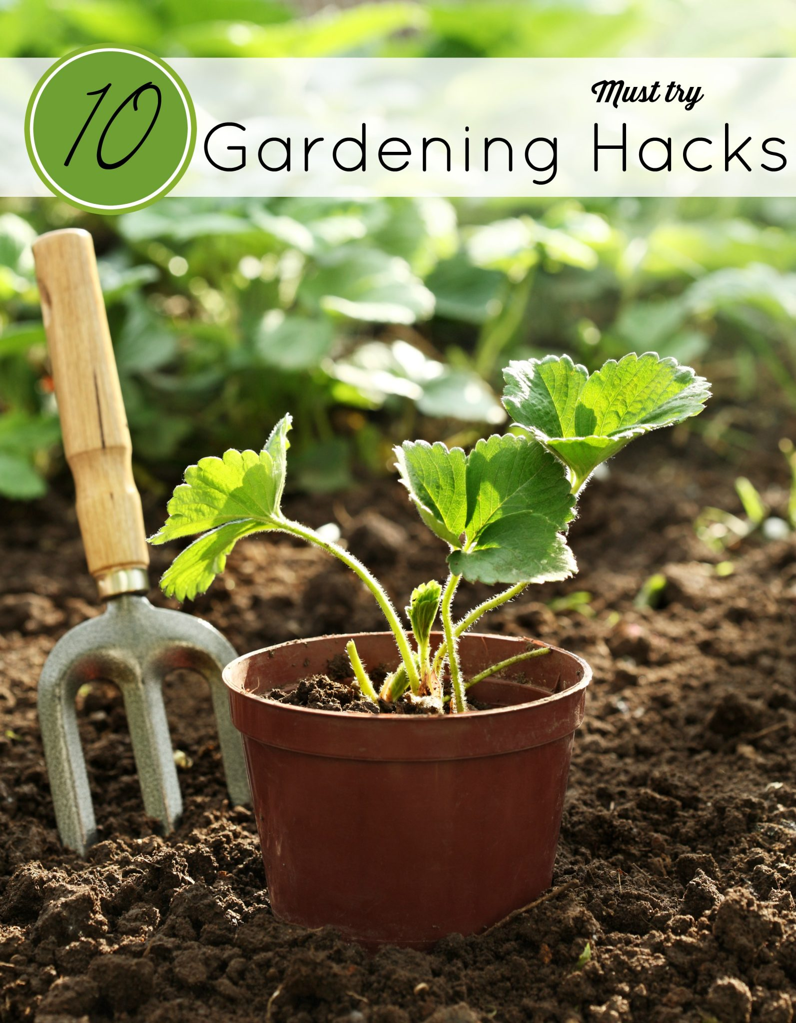 The weather is warm and we are outside getting dirty in the garden. These 10 Gardening Hacks will sure to save you time and a little green.