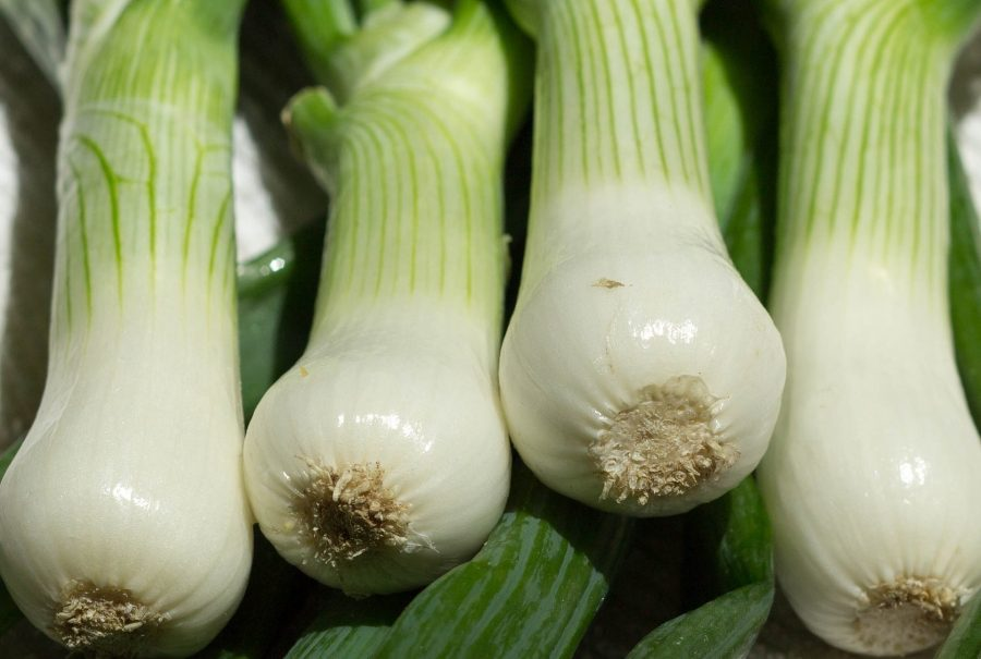 What's in Season Guide: scallions