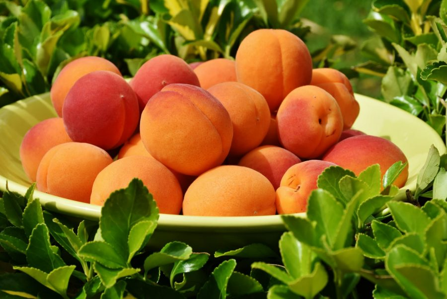 What's in Season -- Apricots