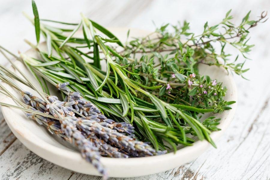 What's in Season -- Herbs