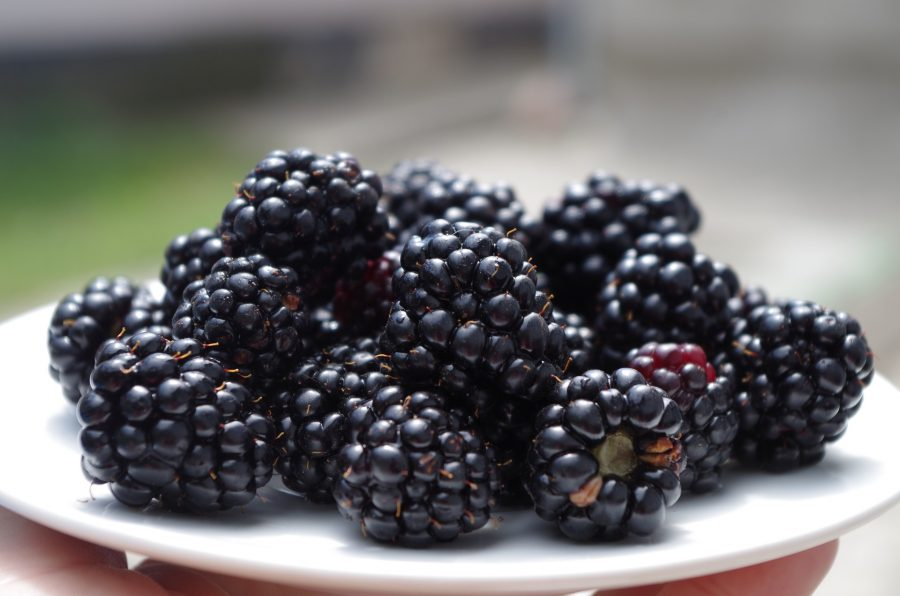 What's In Season--Blackberries
