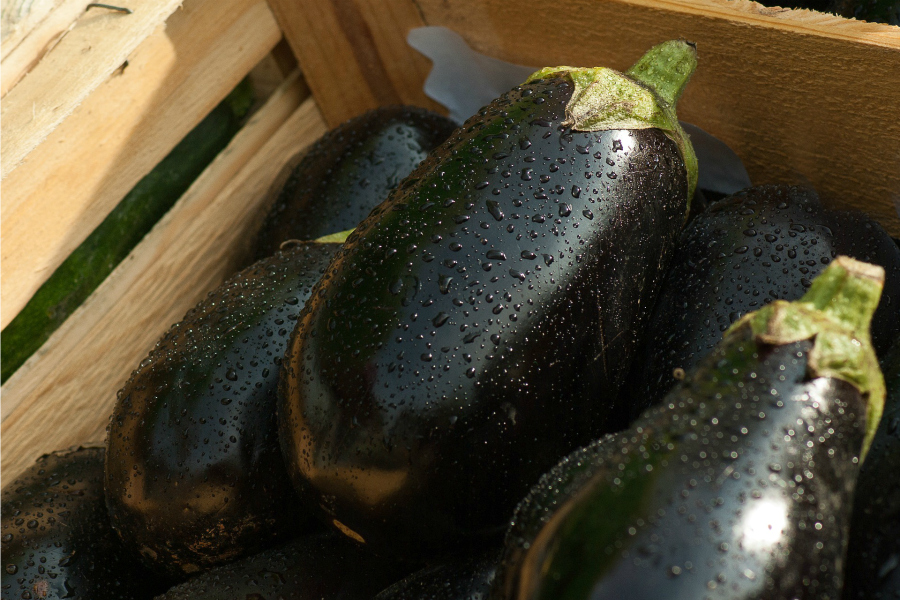 What's In Season--Eggplant