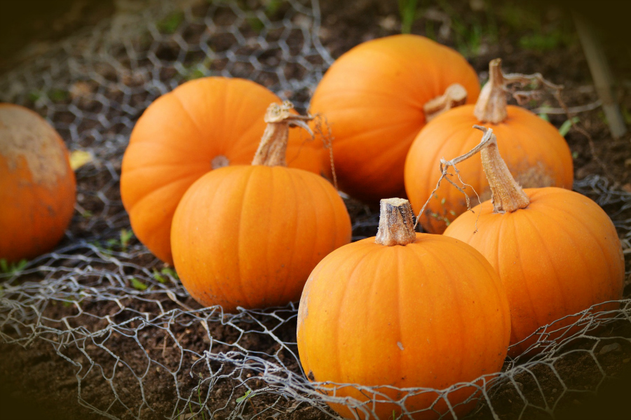 What's In Season -- Pumpkins